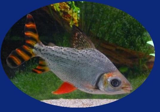 Bassin exterieur l 39 oiseau bleu for Accessoire bassin poisson